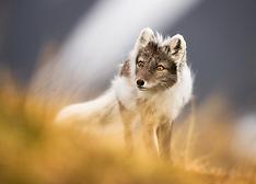 Svalbard #21 2014