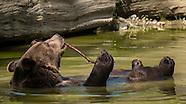 Best of Orphaned Wildlife Center
