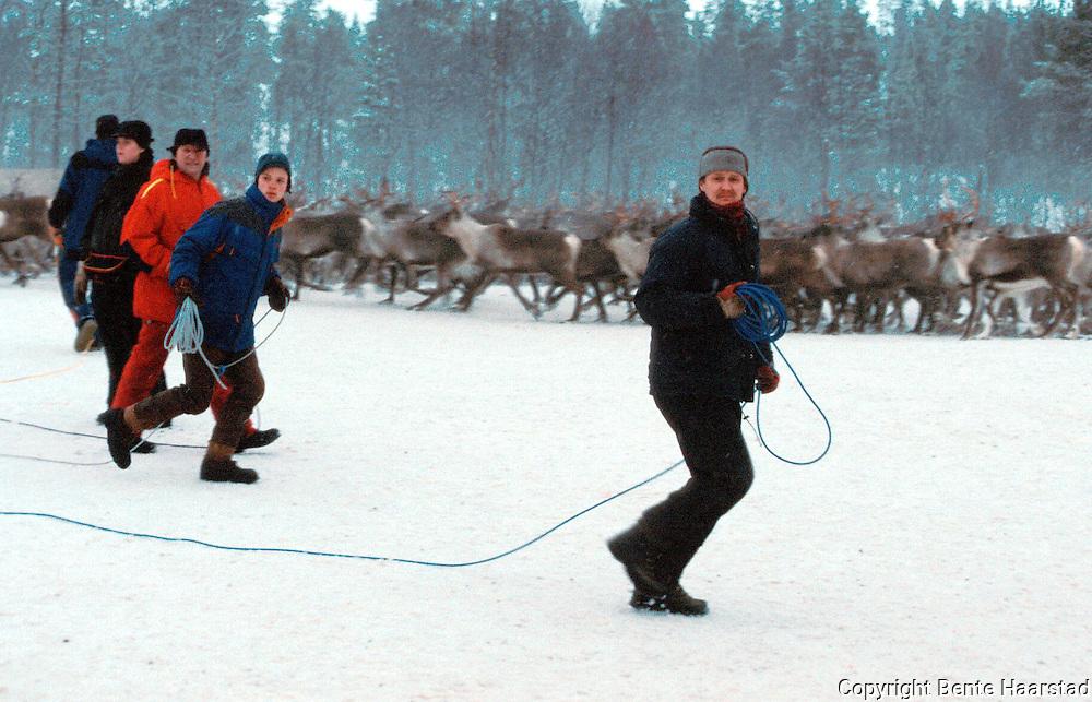 Sørsamisk reindrift i Nord-Trøndelag. Southsami reindeer herding in Mid-Norway. Luru reinbeitedistrikt (Låarte Sijte).