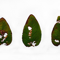 Close up of leaf on white background