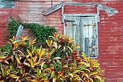 Mauritius. Old hosue and plant.