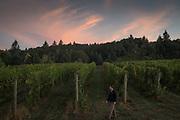 Ben Casteel, Bethel Heights harvest, Eola-Amity AVA, Willamette Valley, Oregon