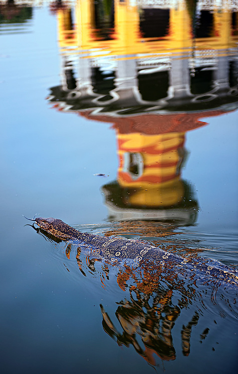 A monitor lizard swimming across a pond at Bang Pa-In Summer Palace, Ayutthaya, Thailand
