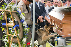 Fallen Bardstown police officer Jason Ellis' partner Figo, center, pays his last respects, Thursday, May 30, 2013 at High View Cemetery in Chaplin. Photo by Jonathan Palmer