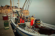 Early morning, fishermen unload their catch from their boat in town of Rovinj in northern Croatia