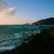 On the day the photographer arrived at Shirasaki, the sea looked quite rough with big tidal waves and many foams at places near the beach.  An almost clear blue sky looks peaceful with slightly rose-colored low-lying clouds and a single bird in the sky on the west in an awesome marine landscape.  The white cape of limestone rocks on the right at the end of the hill.