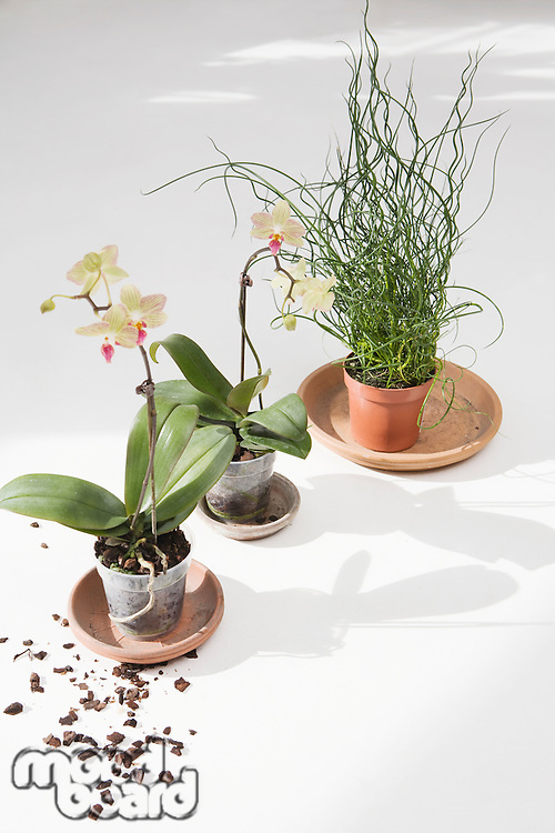 Potted flowers on floor