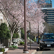 A residential street in Rosslyn, VA.