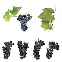 Grapes on white background - studio shot