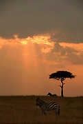 Sunset over Maasai Mara.