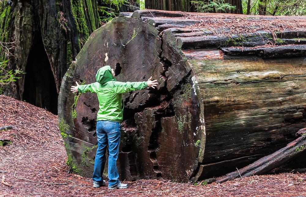 Landsdale Grove, Humboldt Redwoods State Park, California.