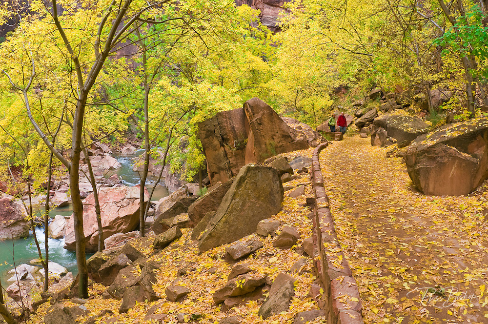 Fall color along the River Walk in Zion Canyon, Zion National Park, Utah