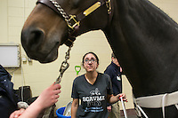 04/03/2015 - Cummings School of Veterinary Medicine student Brenna Pugliese looks up at Willow a Holsteiner Mare, as the horse is fitted with prototype protective leg wear and monitors so she can be recorded on a treadmill on Friday, April 3, 2015 in the Hospital for Large Animals. The leg wear is being developed by Hosso Inc. in conjunction with Cummings School faculty and students. (Matthew Healey for Tufts University)