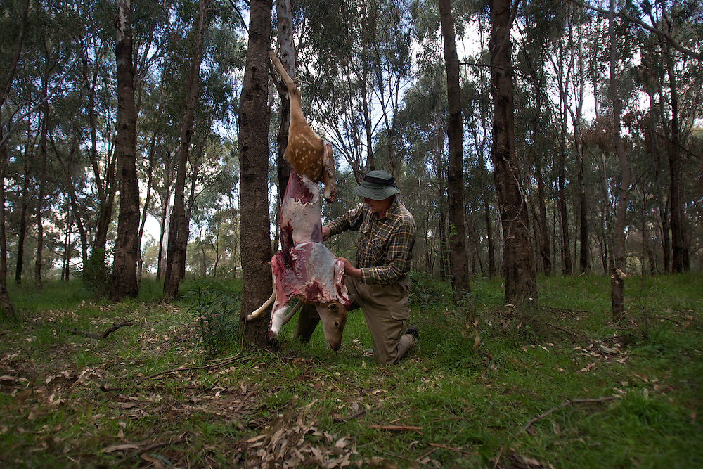 Ziggy Moeller shot a deer and is skinning it. Duck hunting season openning weekend on the Murray River near Howlong. Pic By Craig Sillitoe CSZ/The Sunday Age 22/3/2011 melbourne photographers, commercial photographers, industrial photographers, corporate photographer, architectural photographers, This photograph can be used for non commercial uses with attribution. Credit: Craig Sillitoe Photography / http://www.csillitoe.com<br /> <br /> It is protected under the Creative Commons Attribution-NonCommercial-ShareAlike 4.0 International License. To view a copy of this license, visit http://creativecommons.org/licenses/by-nc-sa/4.0/.