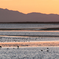 Ojo de Liebre Lagoon filled with migratory birds in Baja California Sur, Mexico