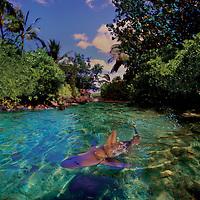 A shark swims through crystal clear waters in a Hawaiian cove