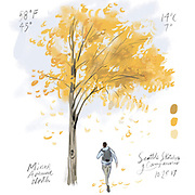 Study autumn's vivid palette before the gray-greens of winter take hold. (Gabriel Campanario / The Seattle Times)