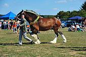 Class 06 - Shire Broodmare & Foal
