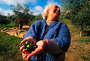 SPAIN, EXTREMADURA, AGRICULTURE harvested olives, the men in the background are knocking them off the trees with sticks