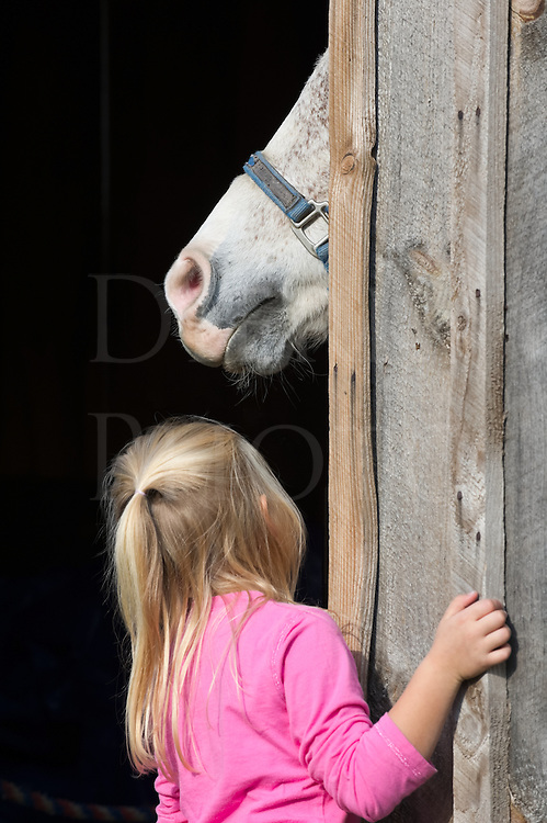 Little Girl Looking Up At Horse At Barn Door Dierks Photo
