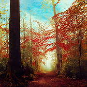 Deciduous forest in fantastic colours