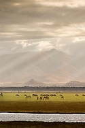 A herd of Zebra and Wildebeests near Lake Manyara, Tanzania. Lake Manyara is a shallow fresh-water lake said by Ernest Hemingway to be the loveliest lake in Africa.  Lake Manyara is a large tourist attraction for people going on safari in the Arusha area.