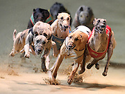 Pixs taken at Wentworth Park Dogs as the greyhounds head into the first bend .<br /> Commissioned by NSWGR