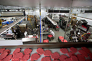 In the main grinding room of the Rochester Meat Company in Grand Meadow, Minnesota, where meat grinder Kelvin Lester works, workers roll vats of freshly ground beef from the mixing and grinding machines to the machines that form the hamburger patties. (From the book What I Eat: Around the World in 80 Diets.) The patties are spit out onto a conveyer belt that goes through spiral flash-freezing tunnels, and then the frozen pink pucks are packed into big boxes for restaurants.
