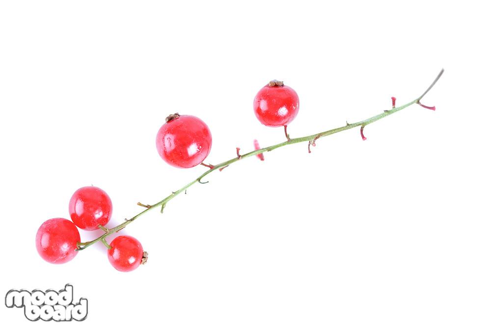 Redcurrants on white background - studio shot
