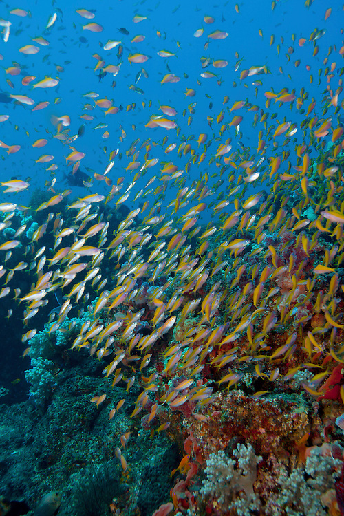 Fish on a reef in Mozambique