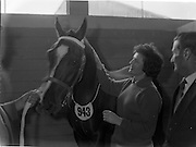 "07/08/1962 <br /> 08/07/1962 <br /> 07 August 1962 <br /> Dublin Horse show at the RDS, Ballsbridge, Dublin, Tuesday. Image shows Daphne Erving, Killyleagh, Co. Down, whose fathers entry No.944 in the two-year old gelding class visits neighbouring stall 943 t give a friendly pat to Her Majesty, Queen Elizabeth the Queen Mother's Gelding, ""Arch Point""."
