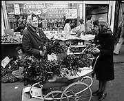 Moore Street, Dublin.      (J97)..1975..23.12.1975..12.23.1975..23rd December 1975..For well over a hundred years Moore Street has served the citizens of Dublin. The longest running open air fruit and vegatable market offers value for money,particularly to those where money is in short supply. Predominately a fruit and veg market there are several traders who sell fish and seasonal goods, as illustrated by the photographs showing turkeys and holly wreaths being sold on the run up to Christmas..Image shows two dealers preparing holly wreaths for sale. Note the pram, these were invaluable to traders when moving stock from stall to stall.