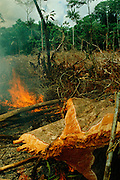 Forest being burned for cultivation in Amazon region, Acre, Brazil