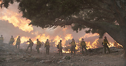 The Granite Mountain Hotshots clear brush around the alligator Juniper tree to save it in Columbia Pictures' ONLY THE BRAVE.