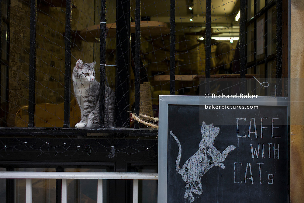 A kitten sits on the ledge outside London Cat Village in Rivington Street, Shoreditch.
