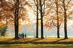 Boekesteyn, s-Graveland 's-Graveland, Wijdemeren Herfstblad, Autumn leave