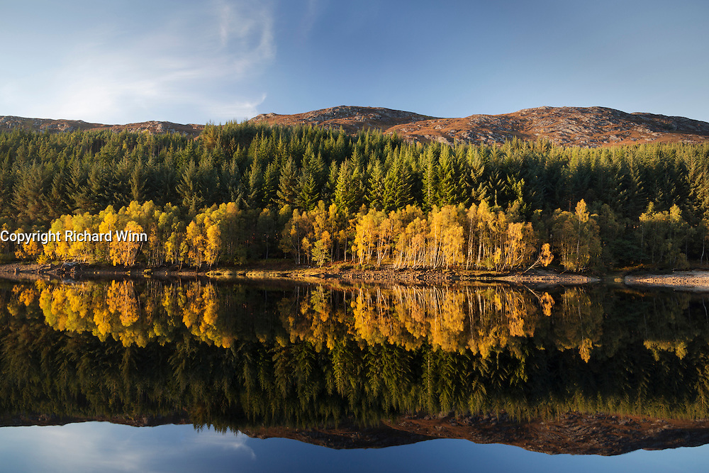 Reflection of birch trees in Drumonreoch wood in the still water of Loch Meig on a late autumn evening.