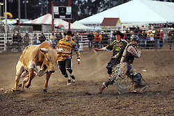 Rider Stetson Lawrence escapes an angry Knock Knock in the third round of Wednesday's 2013 PBR Touring Pro Division event at the Salinas Sports Complex.