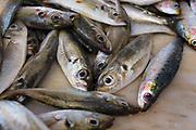 Fish for sale - Vila do Bisbo, Algarve, Portugal