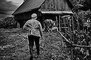 A farmer in Rosia Montana takes her cow to the barn for milking. Many villagers don't want to sell the properties to the canadian company Gabriel resources. Down the houses are hundred of galleries excavated by the romans plenty of gold.