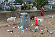 The morning after Saturday night crowds of young peoples' nightlife beach parties, their litter and rubbish from the night before stretches across the coastal paths and shingle, a lady walks her dogs along the messy sea wall, on 19th July 2020, in Whitstable, Kent, England.  A group of local volunteers and council cleaner will soon arrive for the regular morning clean-up that has got worse, they say, during the Coronavirus pandemic lockdown and now, the slow easing of health guidelines.