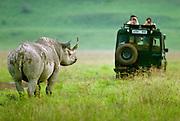 Confrontation with a black rhino, Ngorongoro Conservation Area, Tanzania.