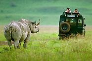 Endangered Black Rhinos
