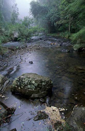 Eungella National Park, Australia.
