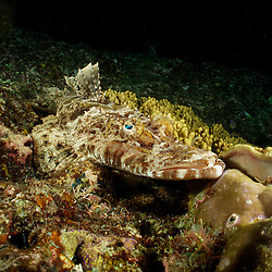 Dive Spot: Fan Club