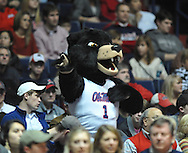 "The University of Mississippi's Rebel the Black Bear mascot cheers at the Mississippi State game at the C.M. ""Tad"" Smith Coliseum in Oxford, Miss. on Wednesday, January 18, 2012. Mississippi won 75-68. (AP Photo/Oxford Eagle, Bruce Newman)."