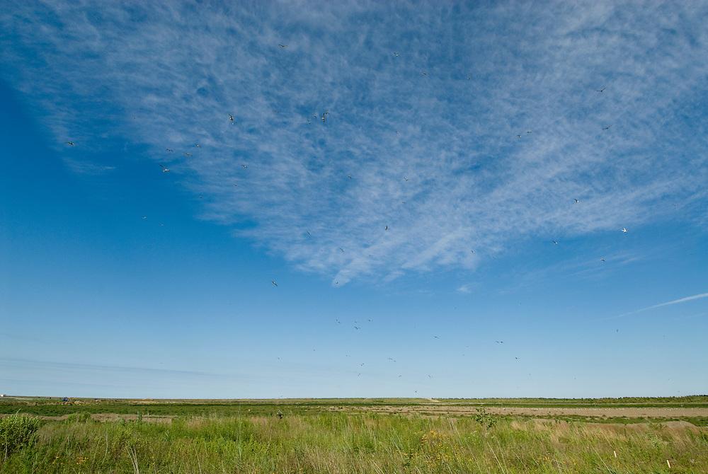 Poplar Island skyline