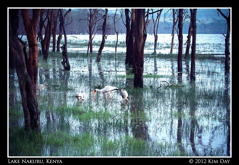 Flooded Lake Nakuru As High Tide Comes In.Kenya - September 2012