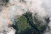 Rainforest Canopy<br /> Near Phillipai<br /> GUYANA<br /> South America