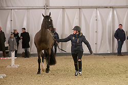 Barbancon Mestre Morgan, FRA, Sir Donnerhall II Old<br /> Jumping Mechelen 2018<br /> © Hippo Foto - Sharon Vandeput<br /> 27/12/18